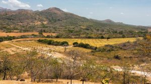 Panama Real Estate Investment Mango Farm